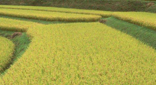 水稻种植管理溯源系统建设方案