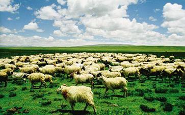畜牧业养殖追溯系统开发解决方案