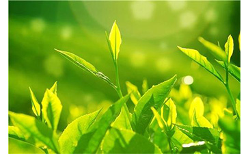 茶叶防伪溯源系统具有哪些优势价值?