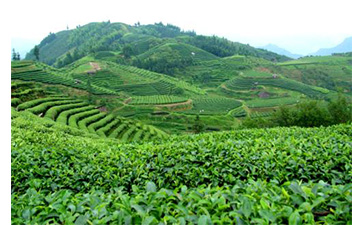 茶叶质量追溯管理系统可以实现哪些功能?具有哪些优点?