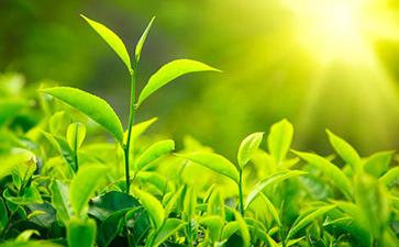 茶叶追溯系统的功能与优势
